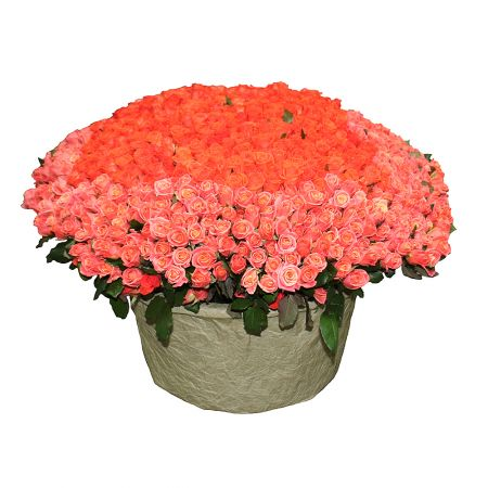 Bouquet 1001 coral rose