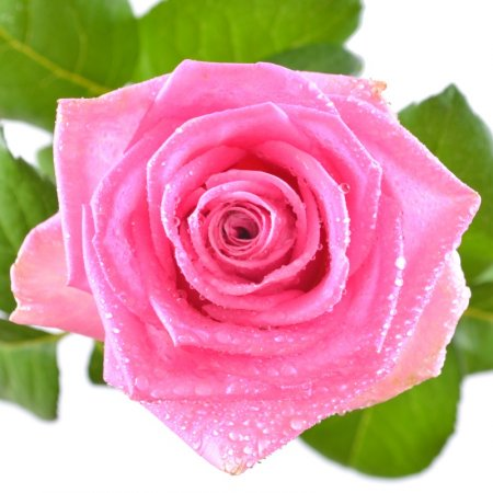 Bouquet Pink roses by the piece