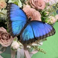 Product Butterfly Morpho