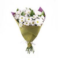 Bouquet Bouquet of chamomiles