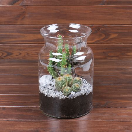 Product Vase with cacti