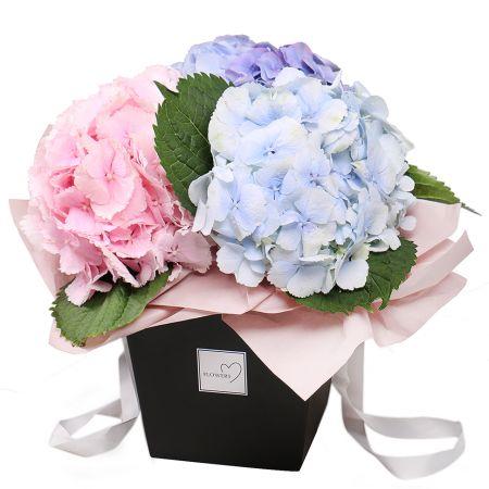 Bouquet Hydrangea in a box
