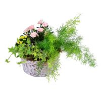Buy a a bouquet 'Summer Morning' with delivery
