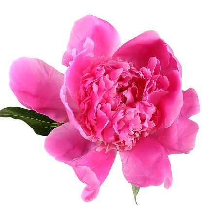 Bouquet Peony crimson one by one