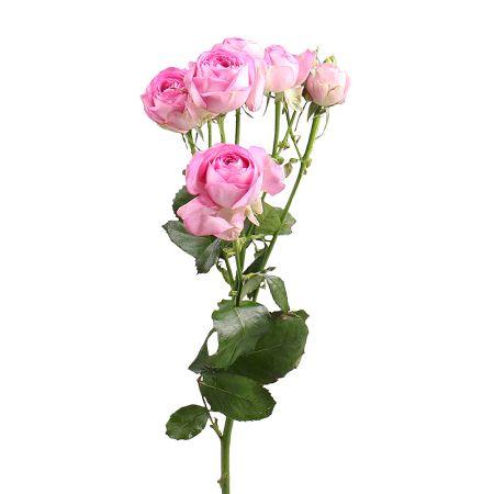 Bouquet Роза Лавандер поштучно