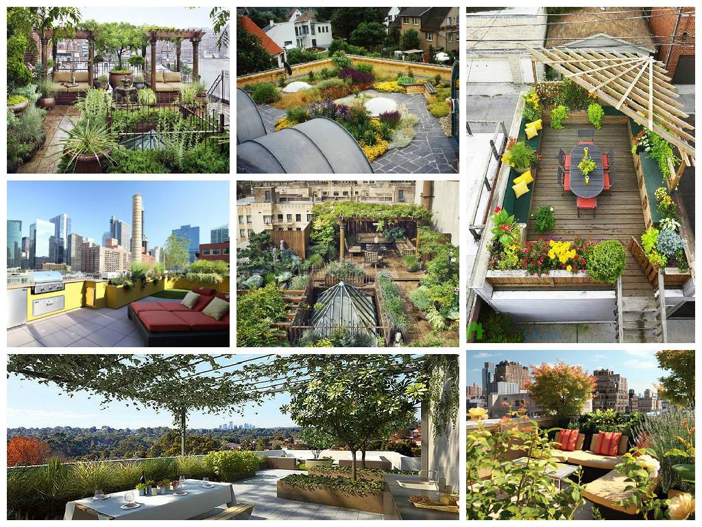 Ideas for rooftop garden