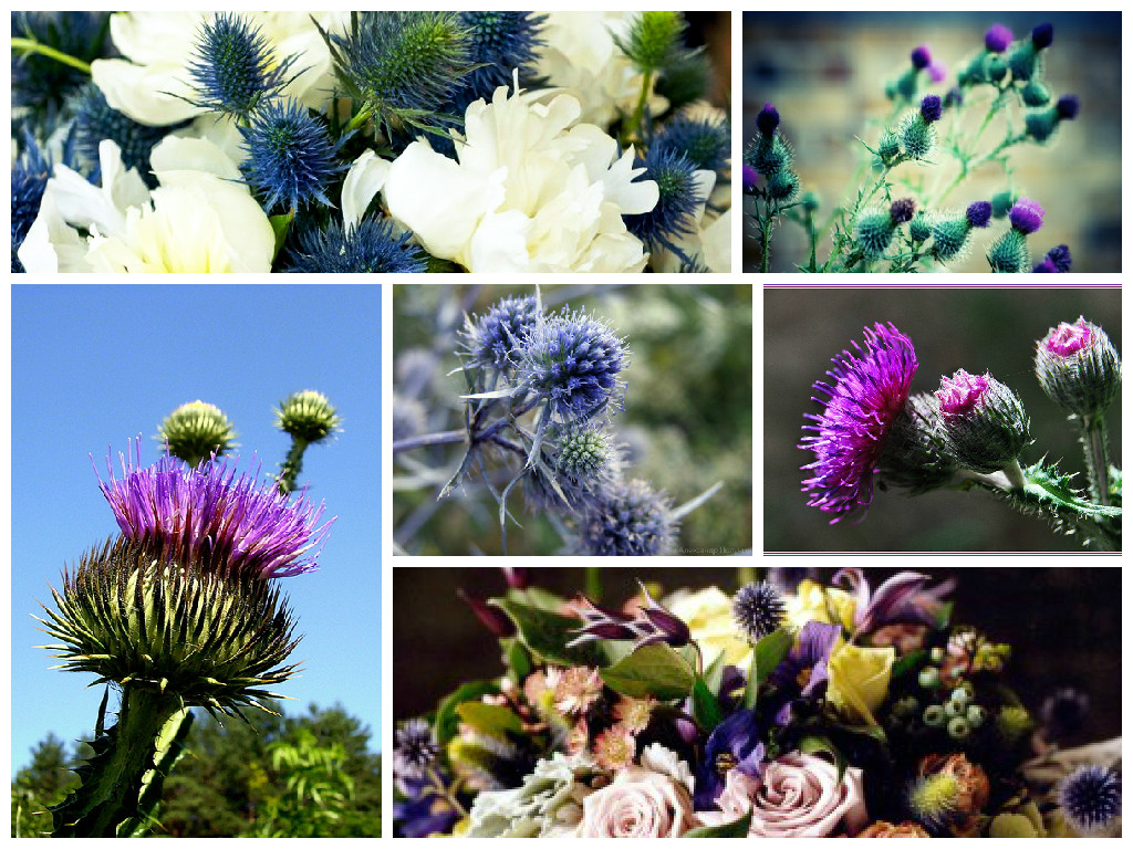 bouquets with thistle